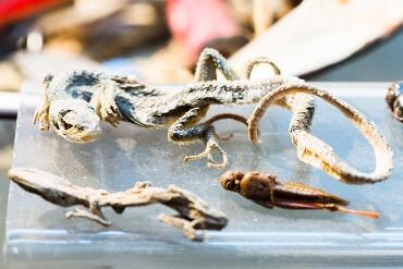 Spicy's Kuriositäten - Reptilien