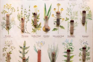 Variation aus dem Kräutergarten